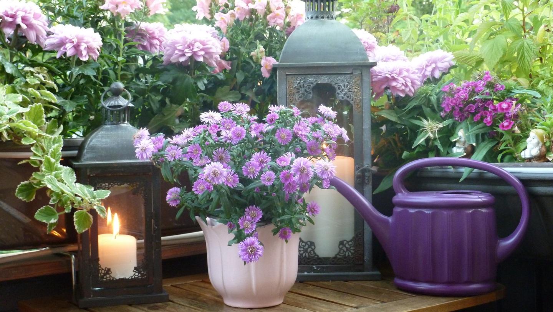 Co warto zasadzić na balkonie na wiosnę?