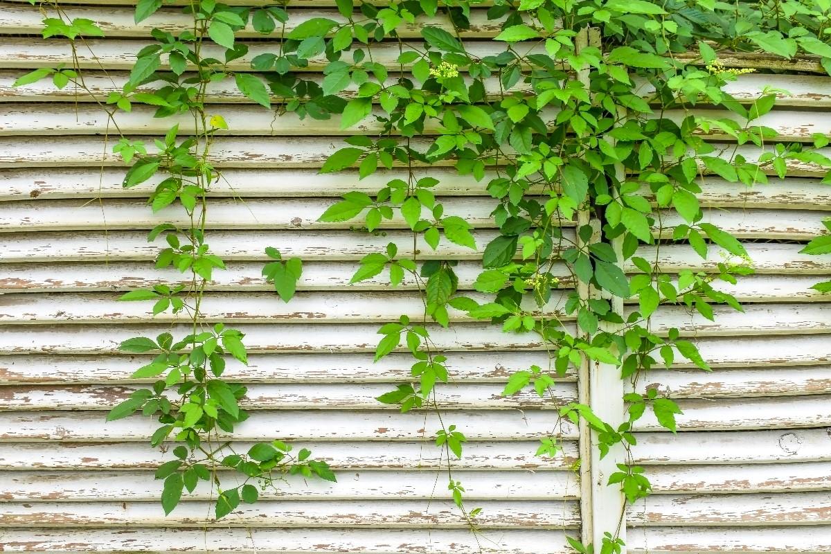 6 idealnych roślin do altany ogrodowej