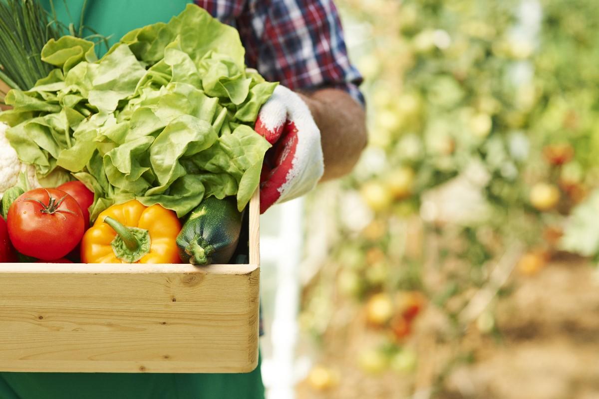 Uprawa warzyw na balkonie - to musisz wiedzieć