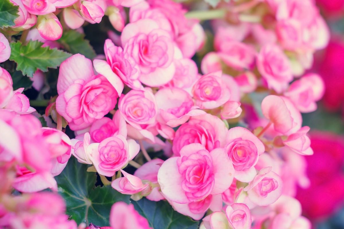 Kwiaty jednoroczne - które warto hodować?