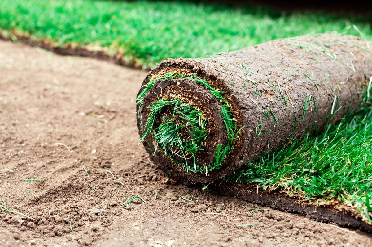 Zakładamy trawnik krok po kroku