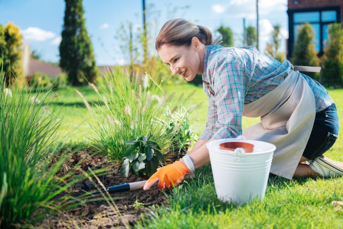 Ogród bez chwastów - jak go zabezpieczyć?
