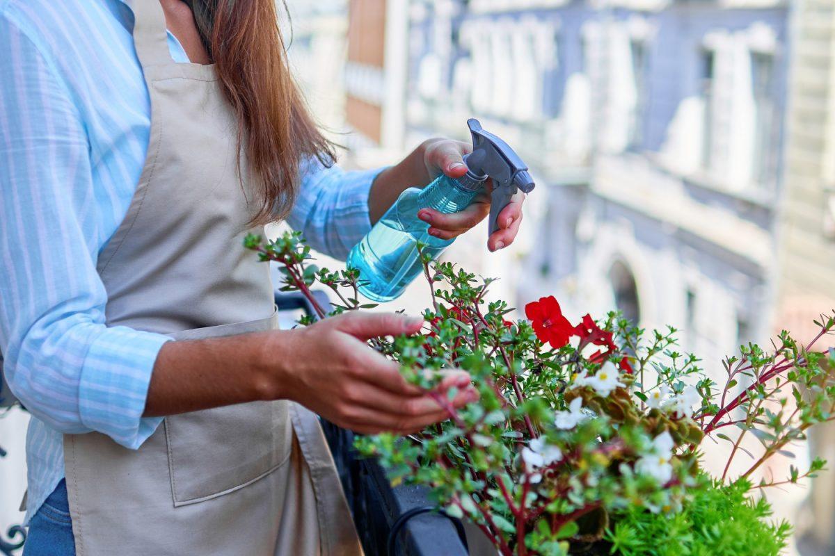 Ogród dla zabieganych, czyli rośliny proste w pielęgnacji
