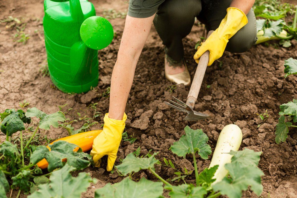 Co robić w maju w ogrodzie?