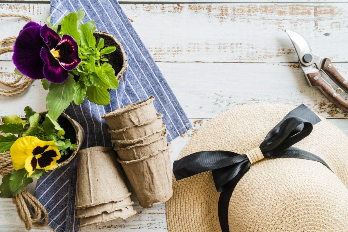 Bratki na balkonie - kiedy i jak sadzić?
