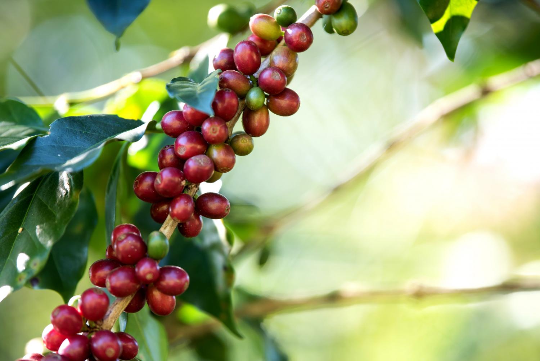 Drzewka owocowe kolumnowe - pomysły na aranżacje ogrodu