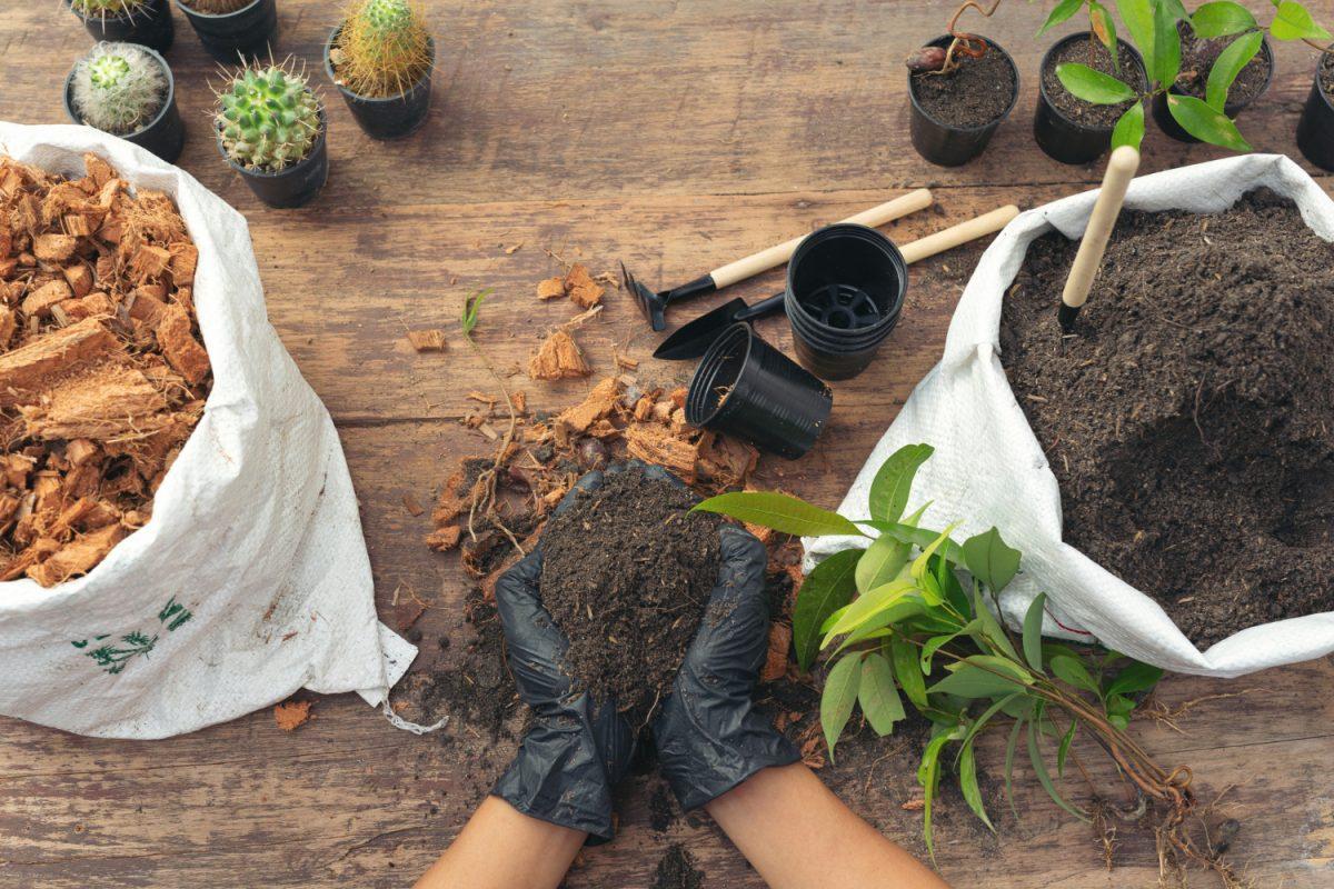 Jakie rośliny sadzić w kwietniu? Rośliny, kwiaty i warzywa