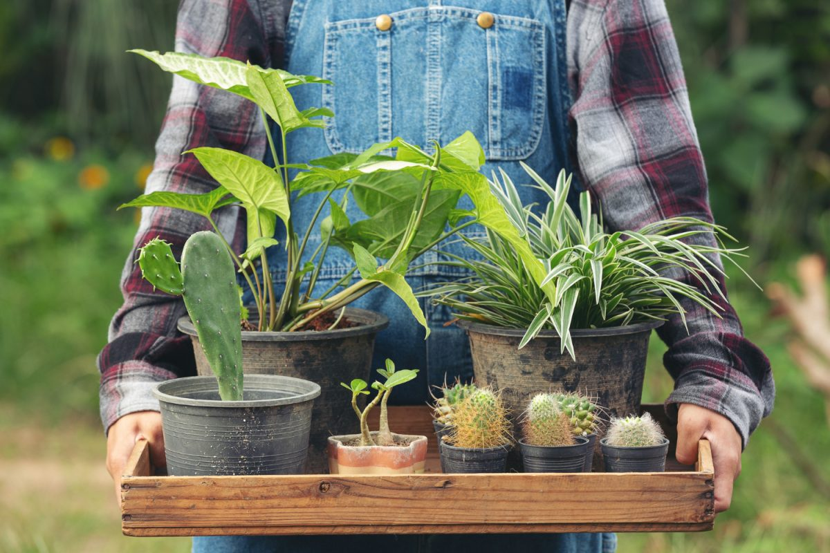 Pielęgnacja ogrodu na wiosnę – krok po kroku