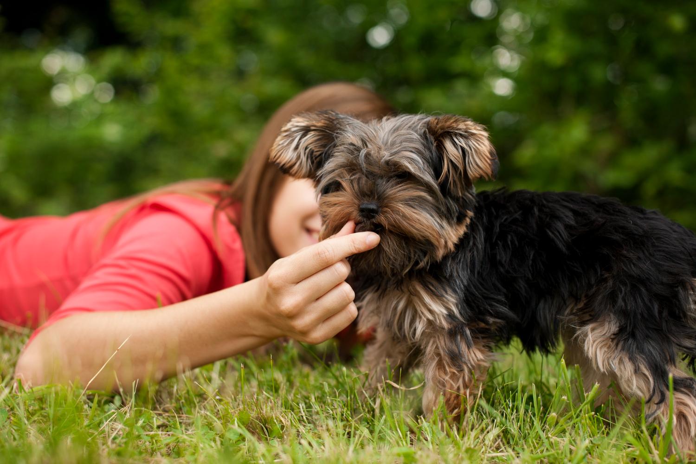 Czy można dawać resztki jedzenia psu?
